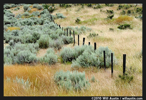 A fence runs through grass and sagebrush in the Methow Valley, Twisp, WA