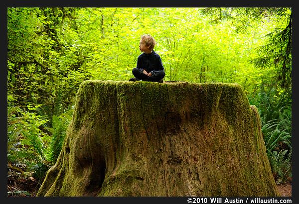 Boy sitting on Redwood stump, Del Norte Redwoods State Park
