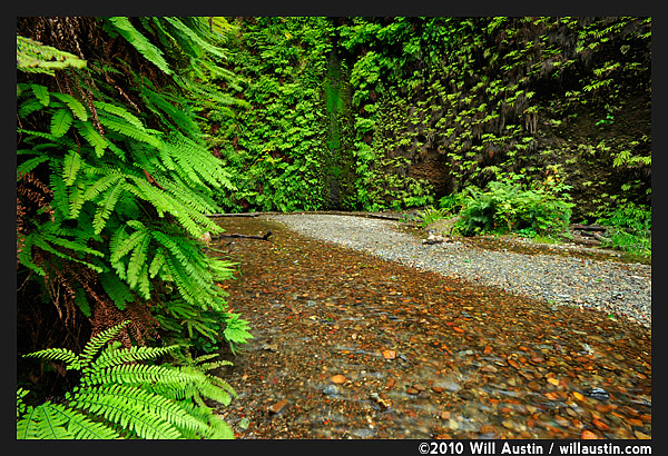 Fern Canyon in California Redwoods PArk