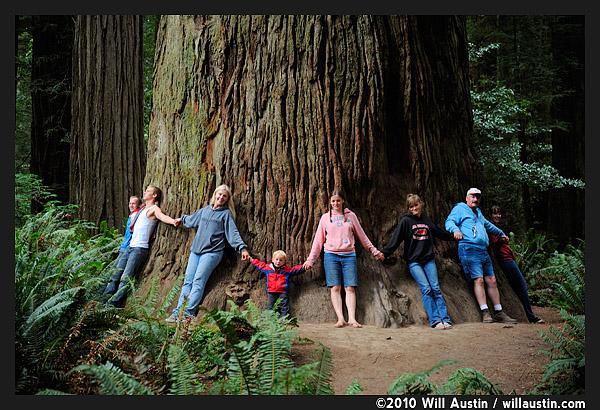 People around a California Redwood Tree