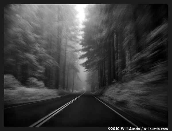 Redwood trees and highway 101