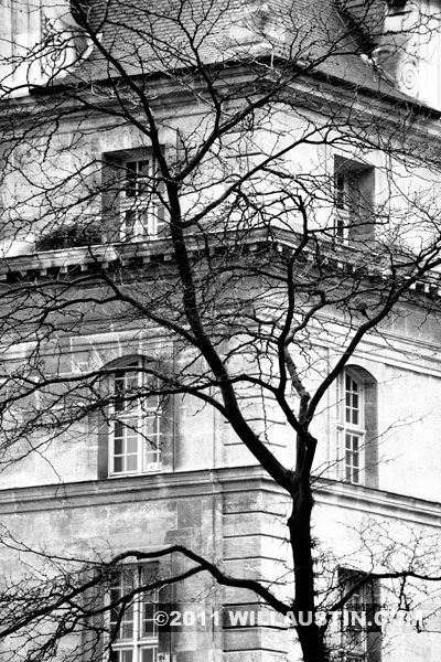 Building and tree in the Invalides area of Paris