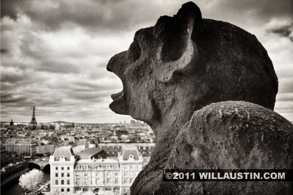 Gargoyle with Eiffel Tower in distance, Notre Dame Cathedral, Paris France
