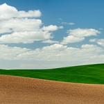 Green wheat field in Idaho