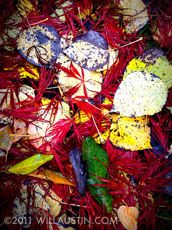 Photo of Fall leaves taken with an iPhone 4s