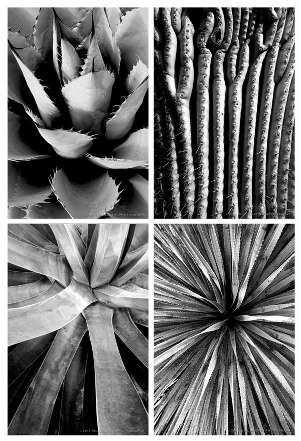 iPad backgrounds by Will Austin Photography