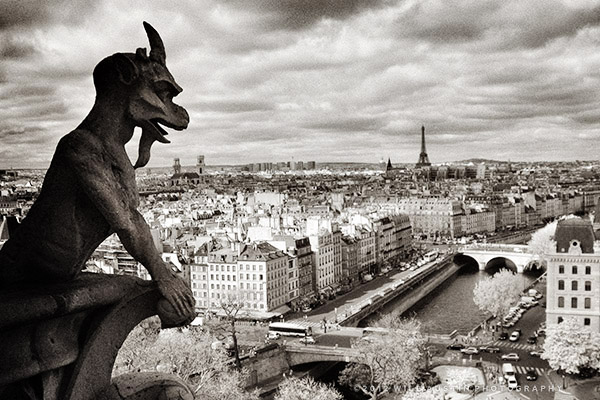 View from Notre Dame in Paris, photo by Will Austin
