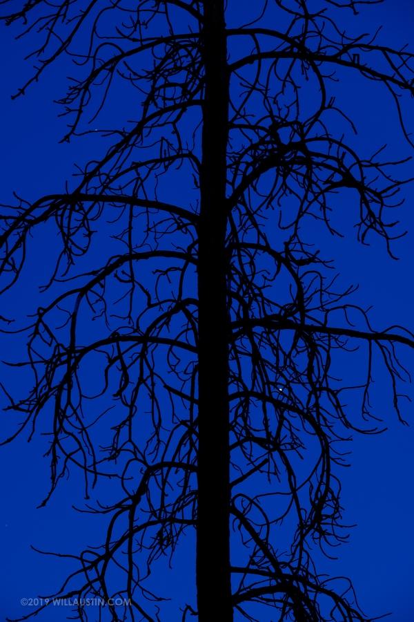 Burned tree at Alta Lake State Park, WA USA