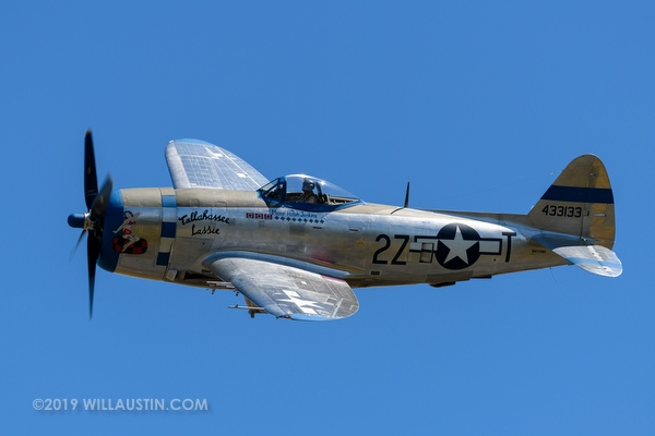 Grumman P-47D Thunderbolt aircraft in flight, Everett, WA USA